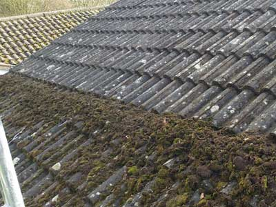 roof cleaning moss